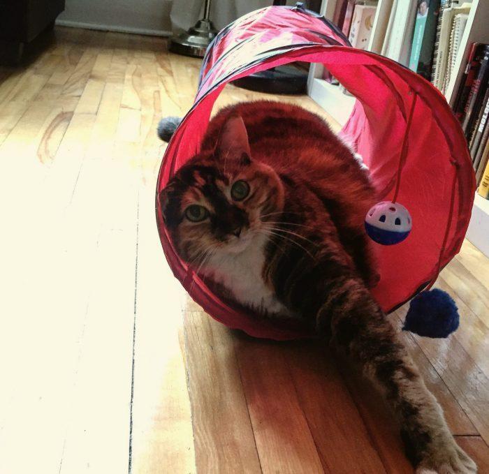 chatte d'espagne